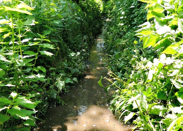 Itchen Navigation footpath also navigable