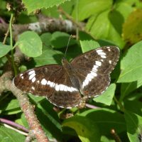 Could butterflies stop the bulldozers?