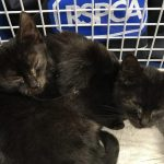Southsea Kittens e1583259400213