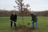 COuncil tree