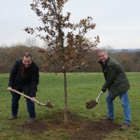 Council plants a tree for every employee