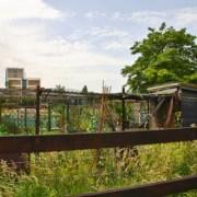 Stepney Farm