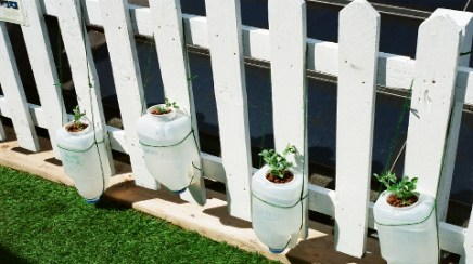 Urban Garden Dalston Plants Pic: Jimena Marseillan