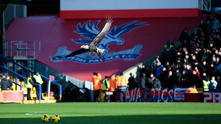 The Crystal Palace FC mascot, a bald eagle. Credit Graham Sawell