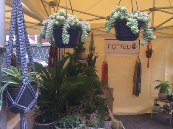 Some of Potted's products, including their hanging pots. Pic: William Taylor-Gammon
