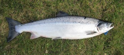Dean Flanagan's Salmon caught on the River Moy