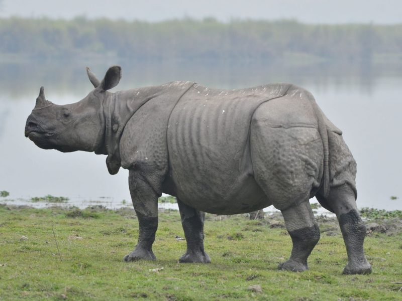 Illegal wildlife trade posing ecological threat to Northeast: Activist