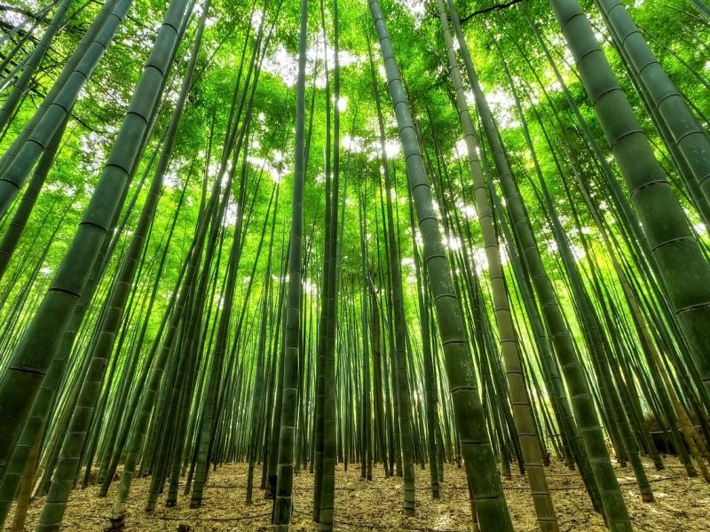 This Assam town is cutting bamboo trees to check COVID spread