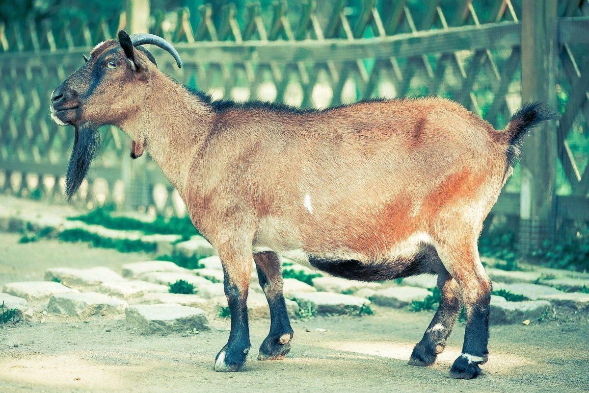 Meghalaya: Govt pushing youth to take up livestock entrepreneurship