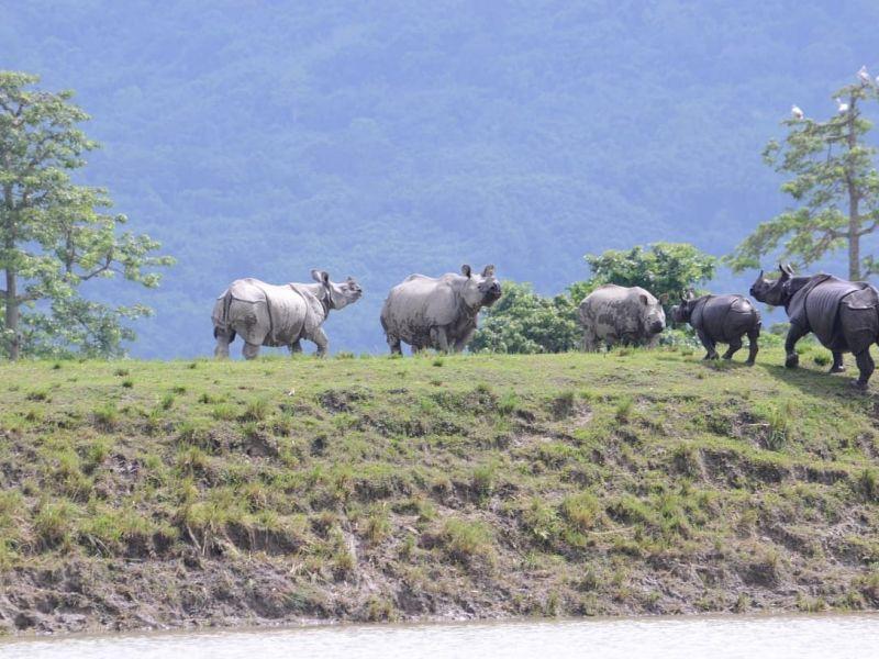 Kaziranga floods