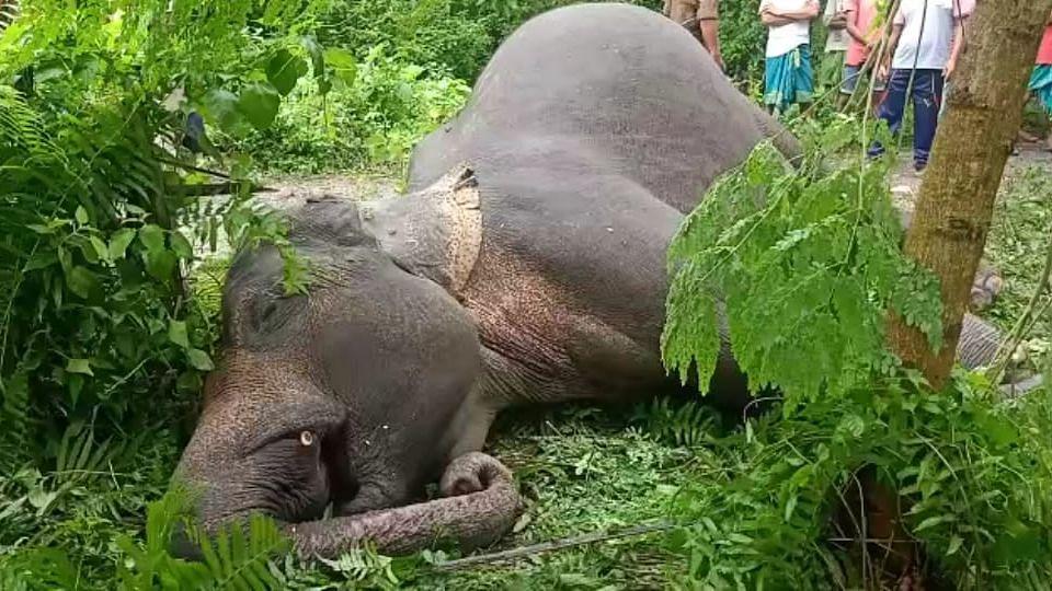 Elephants die in Assam
