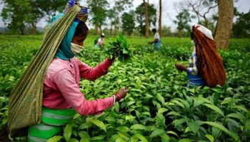 Assam 2021: Political parties go all out to woo tea garden workers