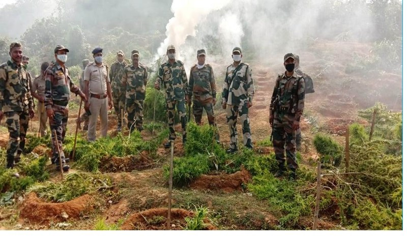 Tripura: Two farmers held by Bangladesh security forces for smuggling drugs