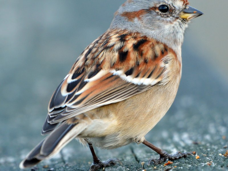 Sparrow selected as the poll mascot for Hailakandi before Assam election