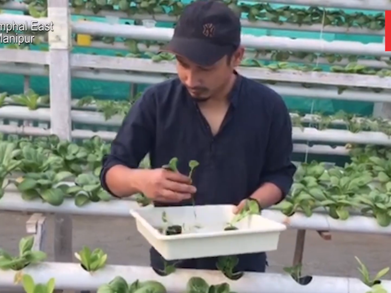 Hydroponic farming helps youth save up to 90% of water