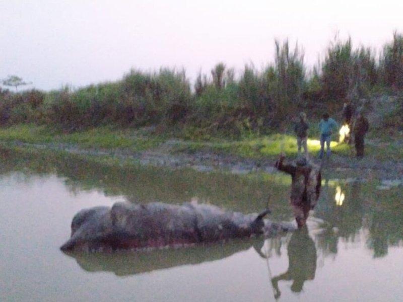 rhino poaching Kaziranga