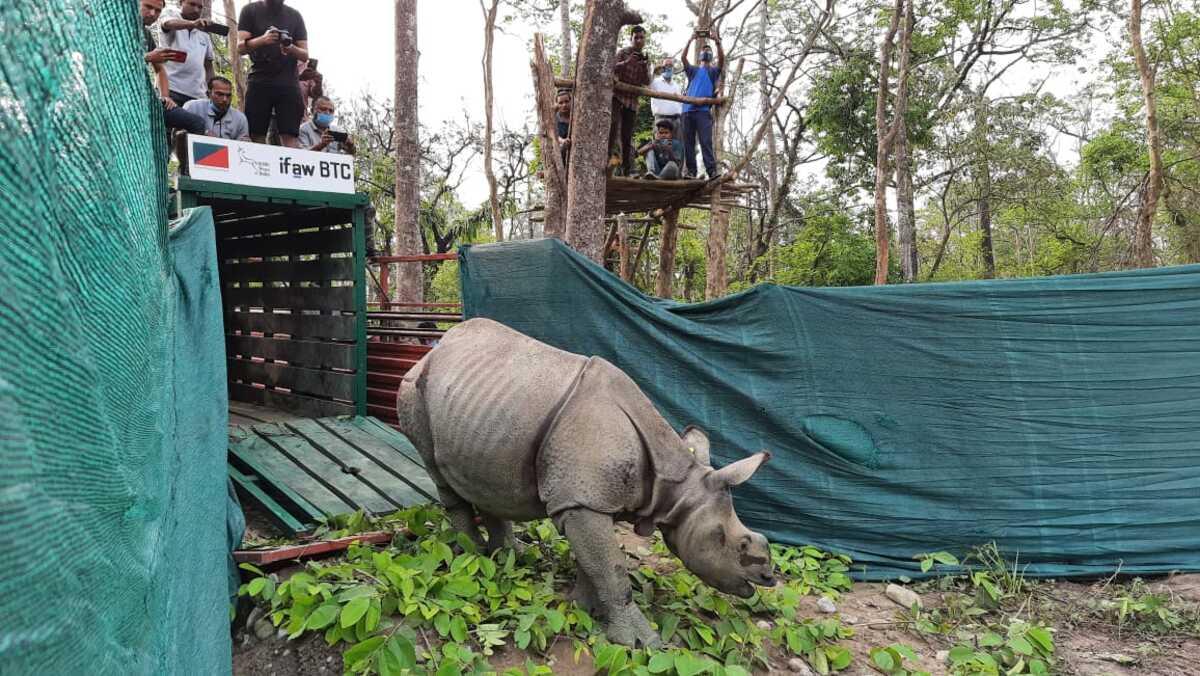 Manas rhino