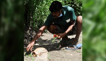 World Turtle Day: Viral pics of animal keeper and turtle in Guwahati zoo