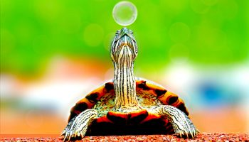 World Turtle Day 2021: Facts about the Jurassic era reptile