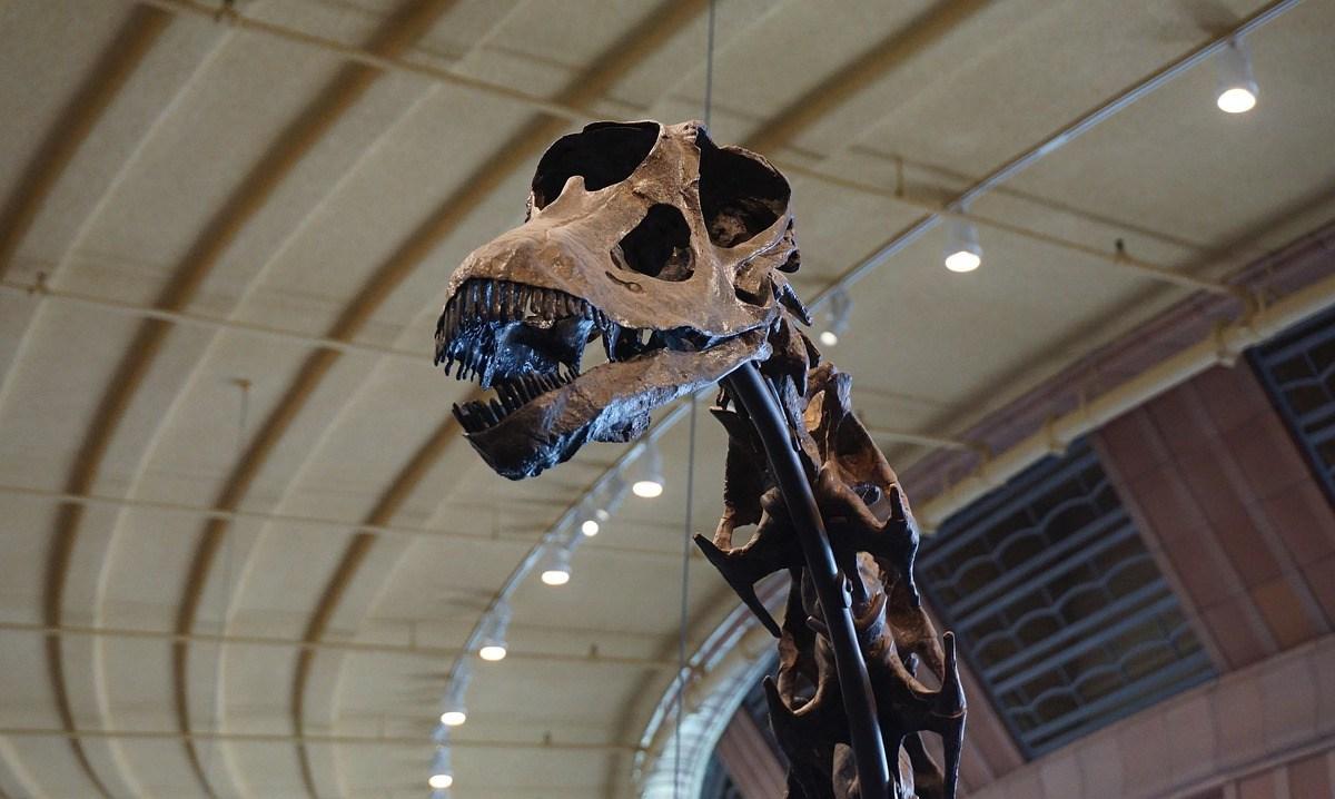 Meghalaya: 100 million-year-old bones of sauropod dinosaurs found