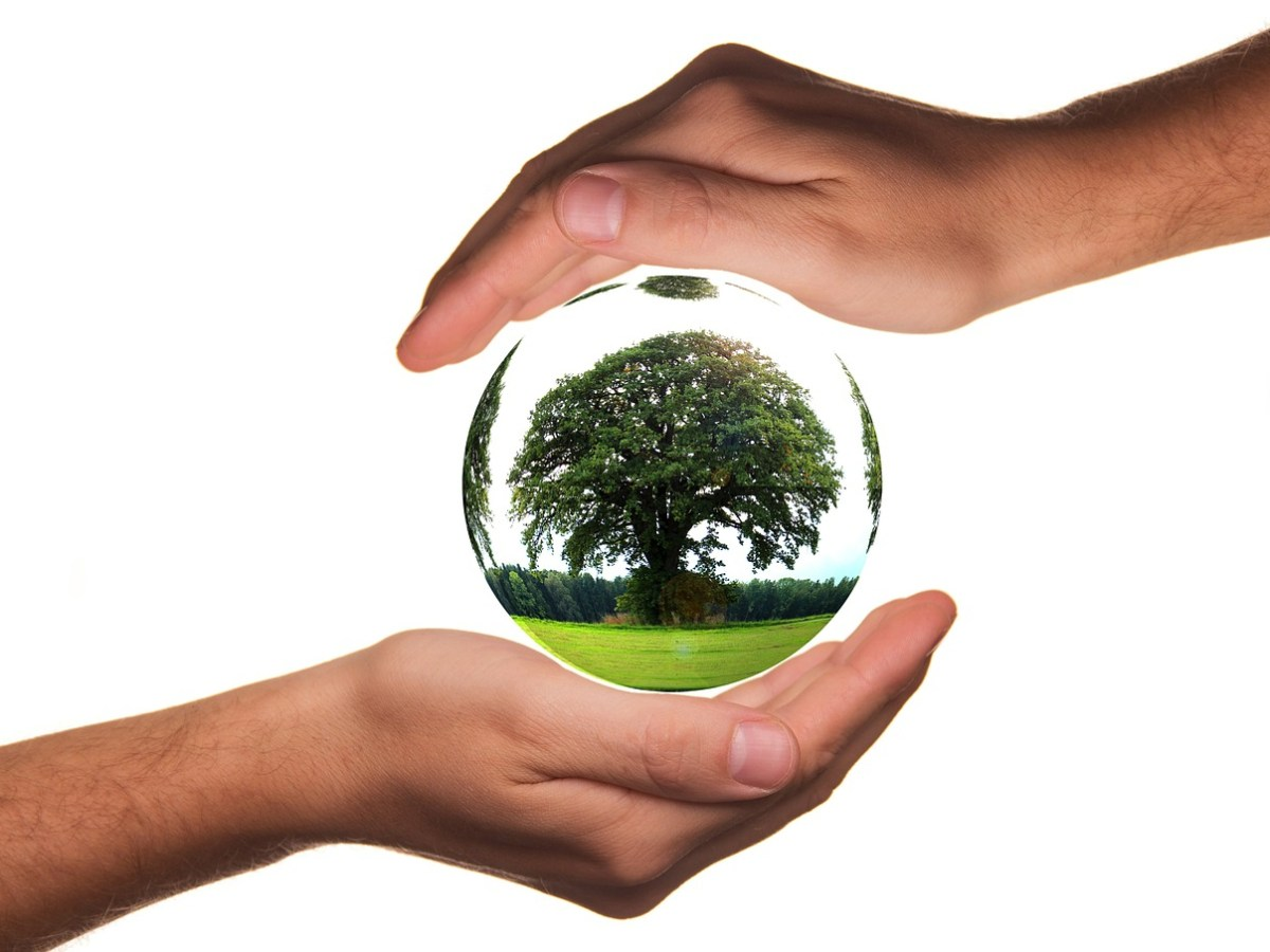 Environment Day: Kohima forest division invites entries for online contests