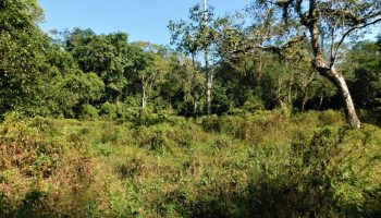 Assam: 80% applications for settlement in forest land rejected in Lakhimpur