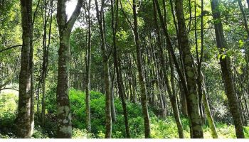 3 timber smugglers held in Assam forest, elephant seized