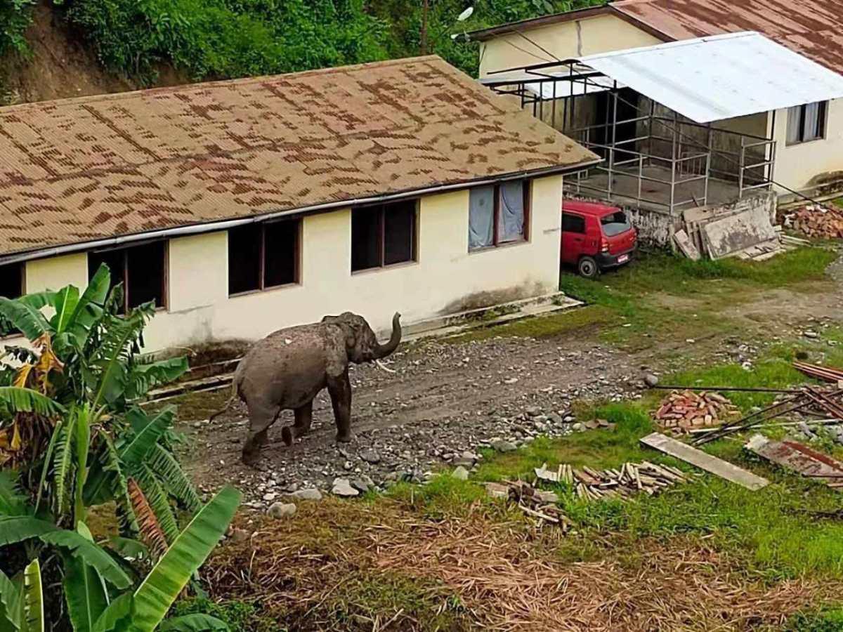 Assam: Elephant handed over to Kaziranga National Park authorities for killing teenager