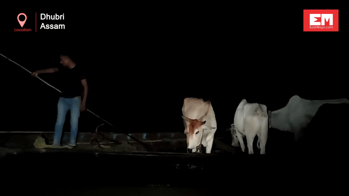 Watch: Assam Police opens fire to foil cattle smuggling in Dhubri