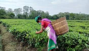 Assam to waive 20% surcharge in power bills of tea gardens, BPL families
