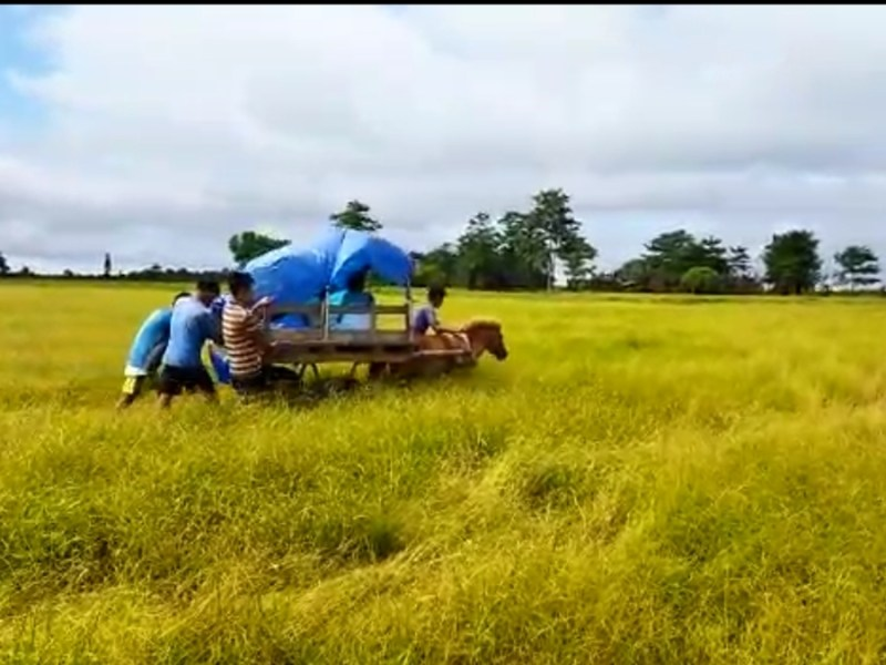 Assam: Pregnant woman taken to hospital in dinghy, horse-cart