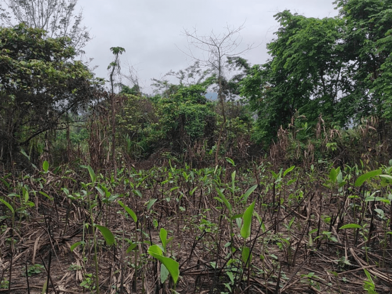 Biswanath's only forest is on verge of extinction, but locals aren't giving up