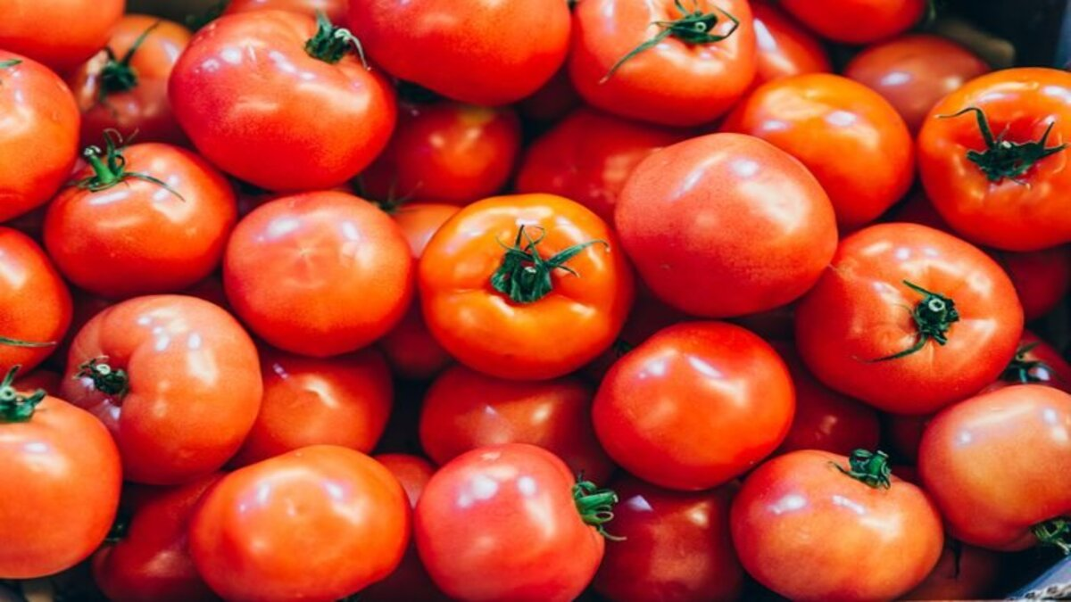 Tomato prices crash to Rs 4/kg amid supply glut in most growing states