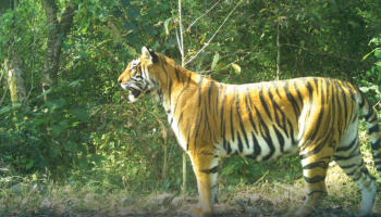 Frontline forest staff of Assam's Manas Tiger Reserve praised for conservation work