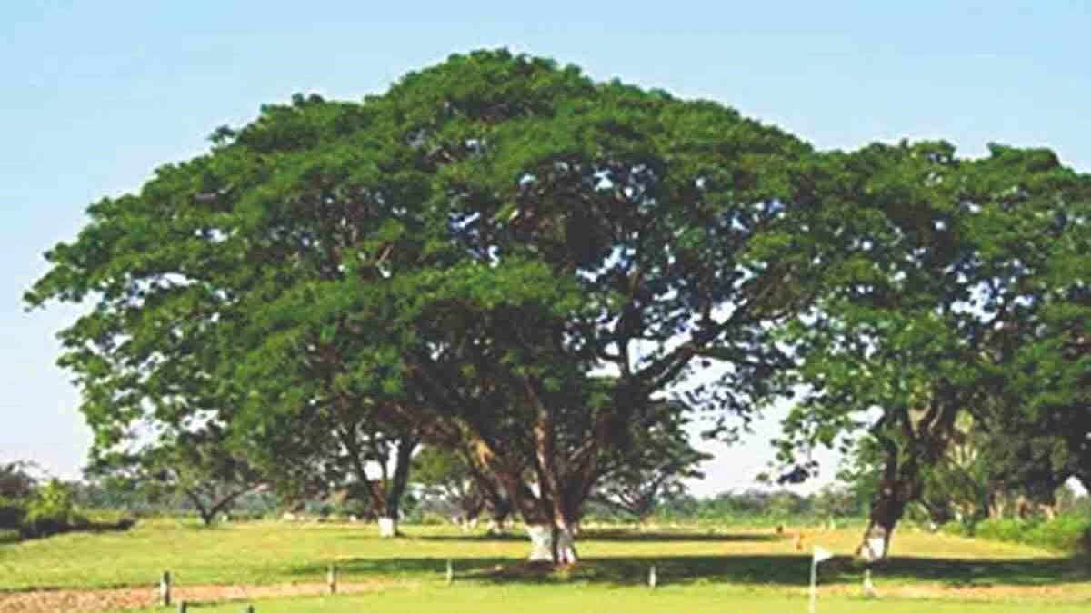 Assam's century-old golf course wins battle to preserve its turf