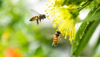 Odisha to use bees to prevent elephants from entering human habitations