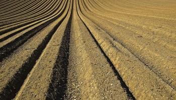 Assam govt fertiliser