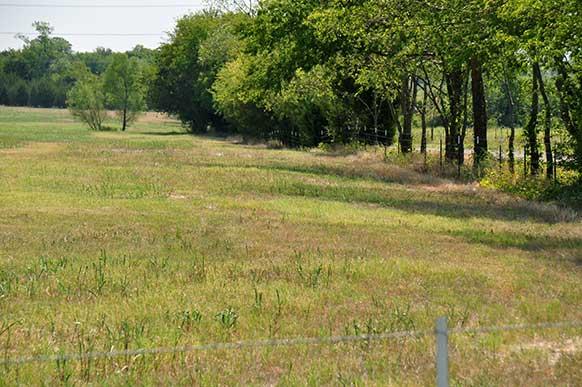 163-lamar-county-near-paris-texas-4