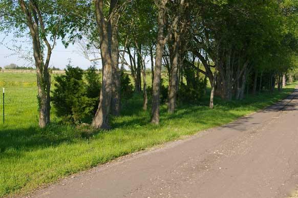 163-lamar-county-near-paris-texas-8
