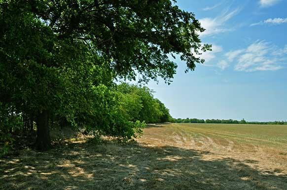 163-lamar-county-near-paris-texas-9