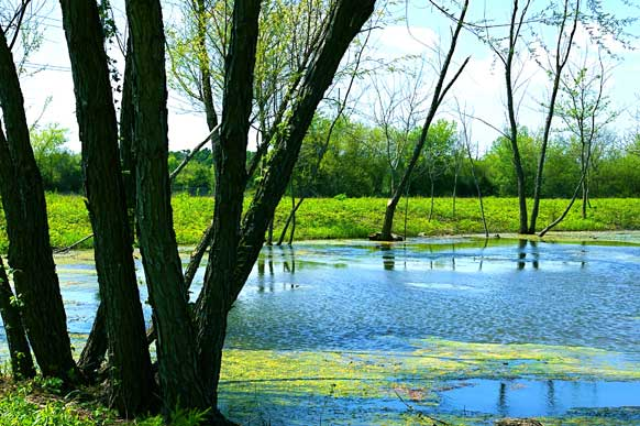 37-7-hilltop-meadow-small-pond-paris-tx-pond