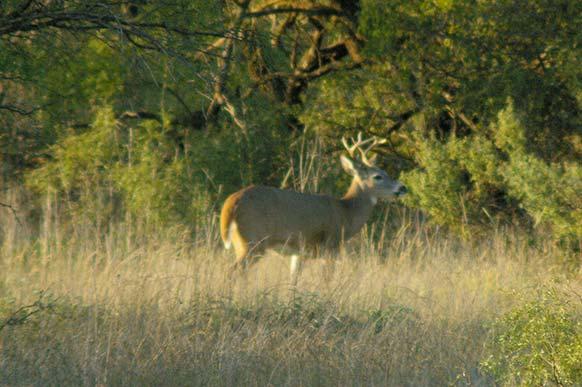 193_deer_field