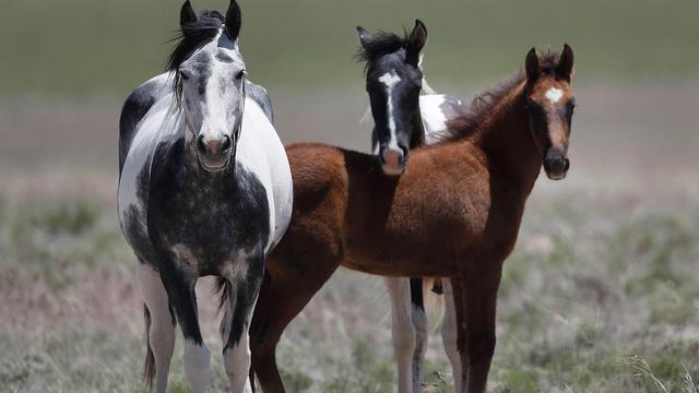 horses_1553015682599.jpg