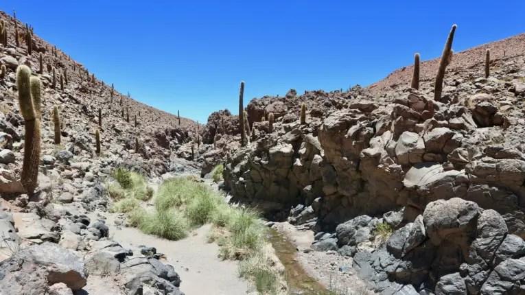 cactus canyon guatin