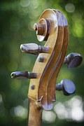 cello-177437__180