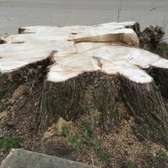 "CCNA continues tree campaign, debates pipe replacement bids process, laments Flint Journal ""litter"""