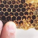 Bees making sweet honey on Flint's East Side