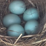 Flint financial advisor also helps bluebirds feather their nests
