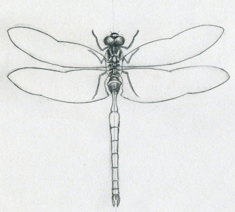 https://i2.wp.com/www.easy-drawings-and-sketches.com/images/dragonfly-drawings08.jpg