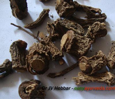 Hemidesmus indicus